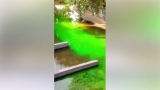 Из-за вандалов воды зеленый был не только в колодцах, но и в реке Лыбидь (видео)