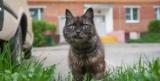 Російських забудовників зобов'яжуть обладнати підвали проходами для кішок